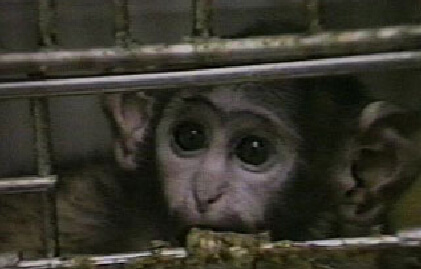 You Can Help Animals in Laboratories!