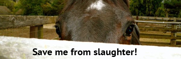 horse-slaughter-action
