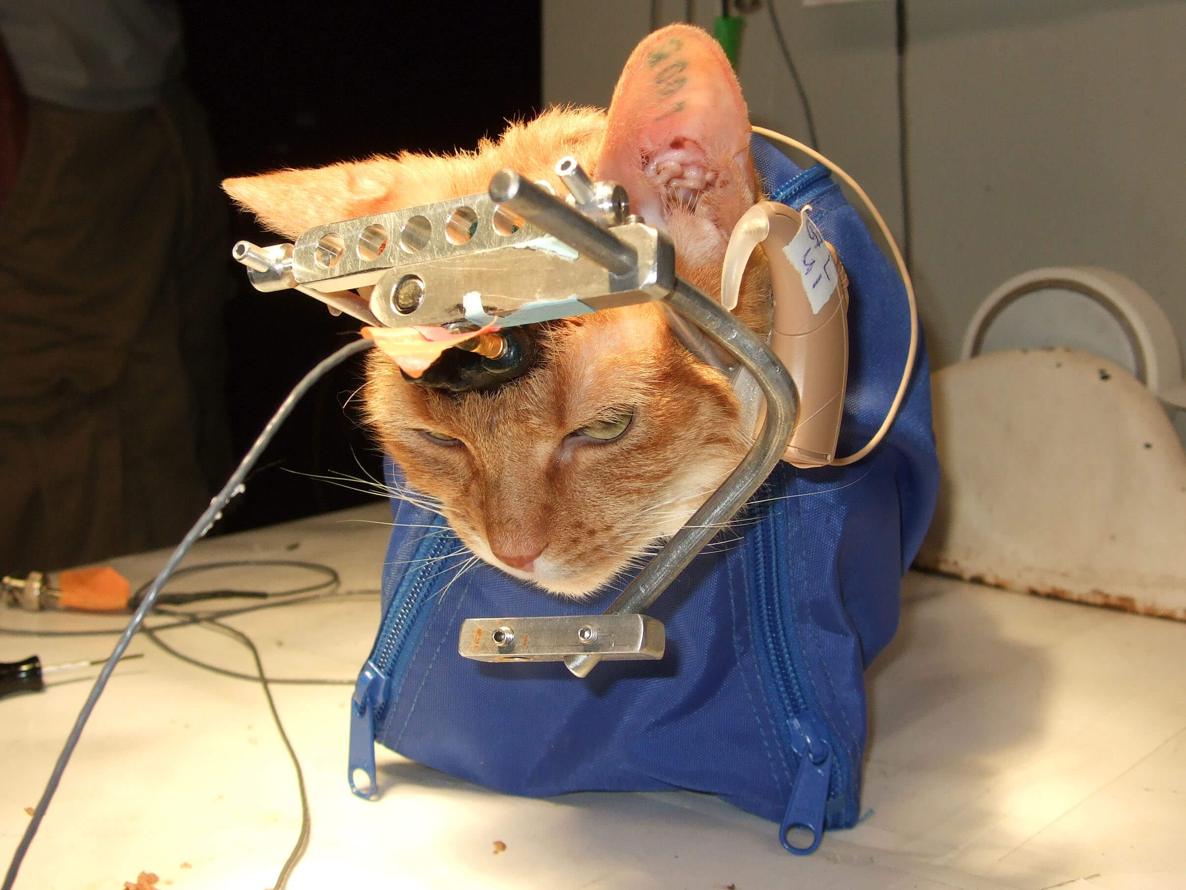 How is Animal testing improveing surgical procedures?
