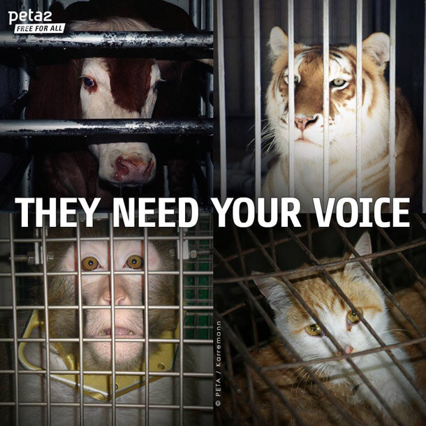 they need your voice social image monkey cow tiger cat