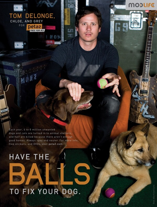 Tom Delonge 'Have The Balls To Fix Your Dog' Ad Heroes Featured Image