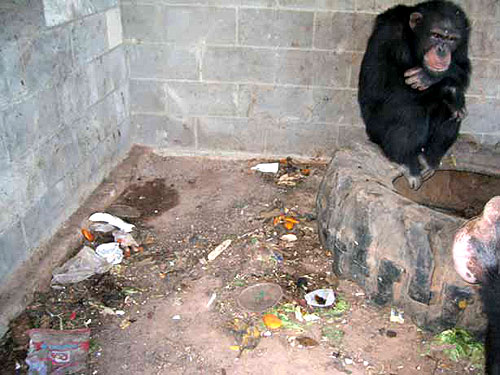 Tell Nickelodean to Stop Chimpanzee Abuse  Featured Action