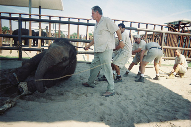 Trial-Unveils-Extreme-Elephant-Abuse-by-Ringling-Bros.-Circus-Action-Featured-e1425667991484