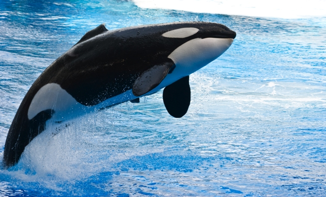 Participate in the SeaWorld Sign Mission Take Action Featured