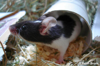 cute mouse in paper tube