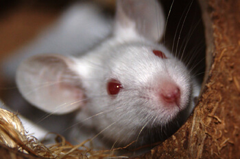cute white mouse face