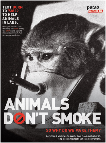 peta2 animals dont smoke psa color jpeg