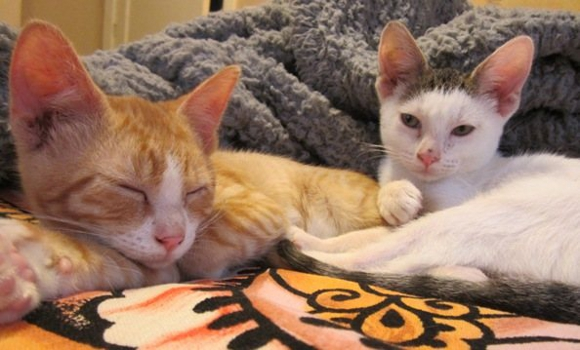 Caboodle Ranch cats Felix and Bronson