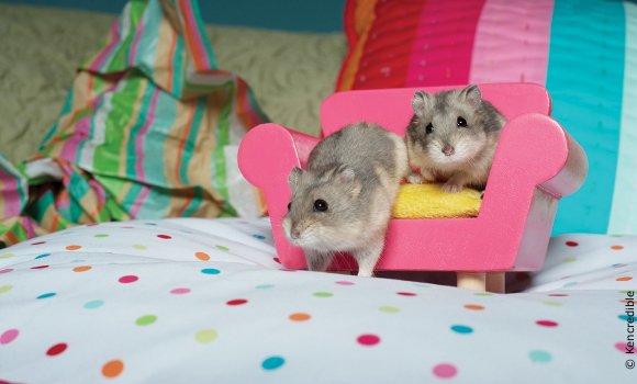 hamsters Little Tess and Amelia from U.S. Global Exotics investigation