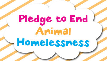 sia pledge to end homelessness button