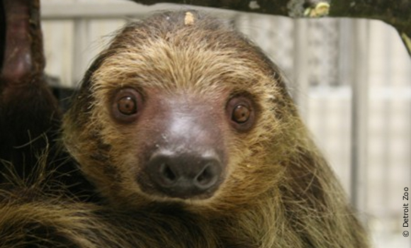 sloth from U.S. Global Exotics investigation