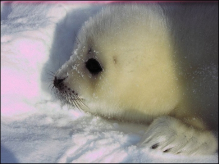 Cute Seal Pics with Captions!