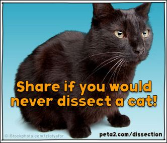 cat dissection shared image