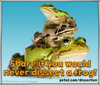 frog dissection shared image