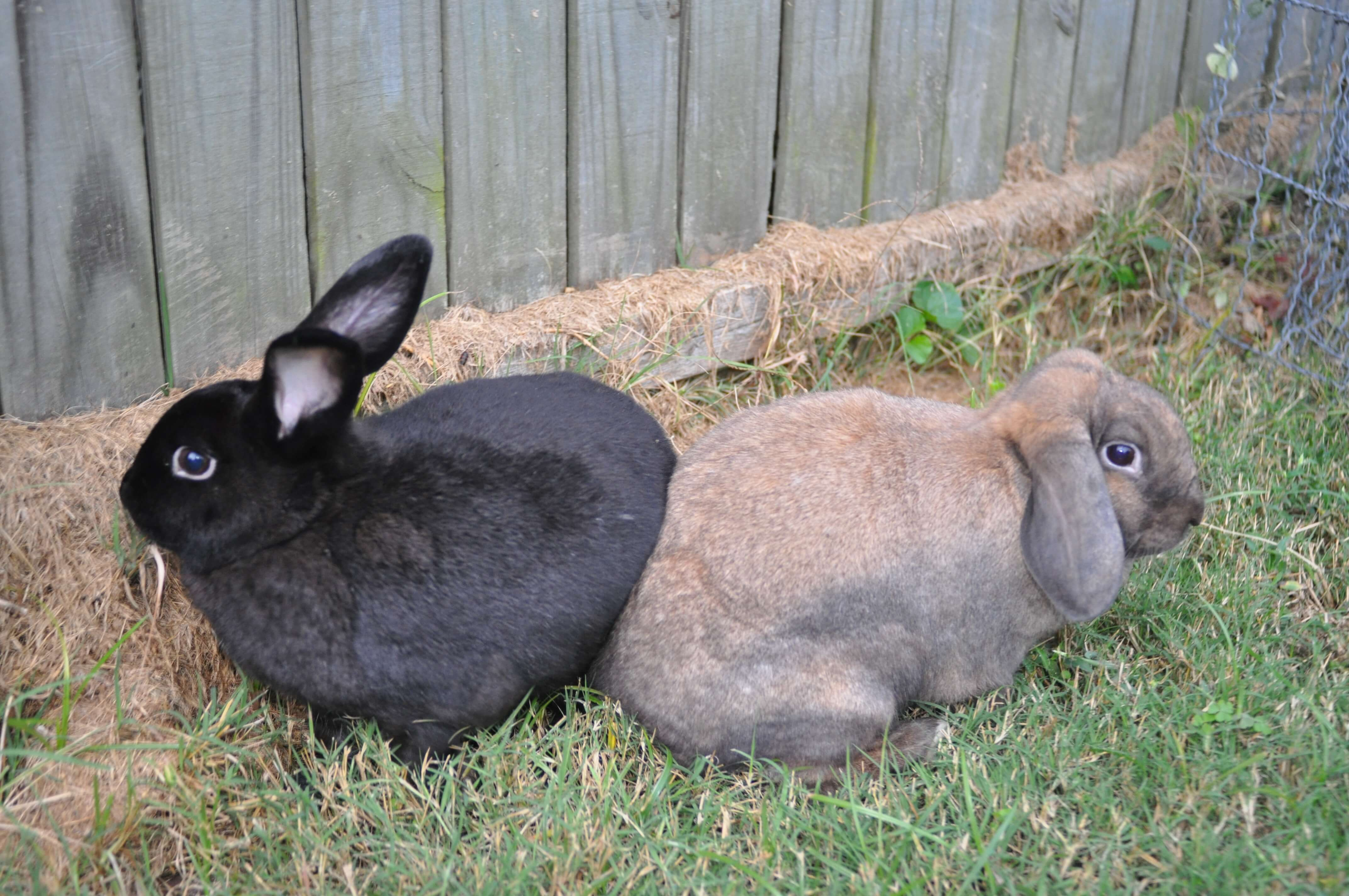 lucy and peggy from bunny magic rescue