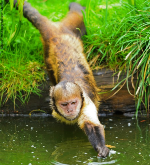 monkey playing in water