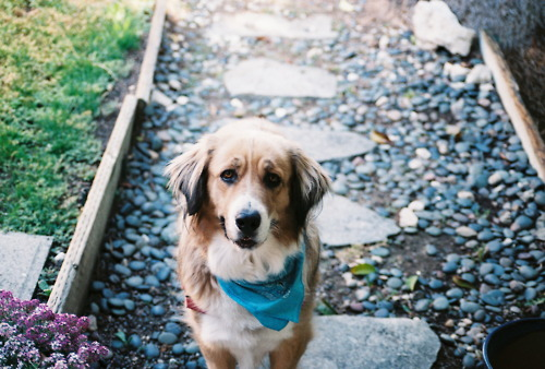Tips to make your next walk truly your dog's best ever