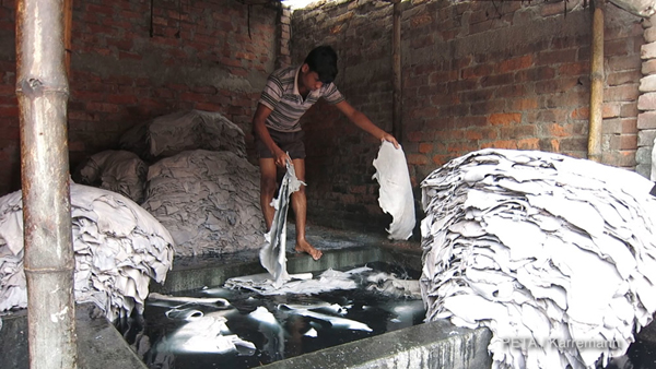 Bangladesh leather worker soaking hides