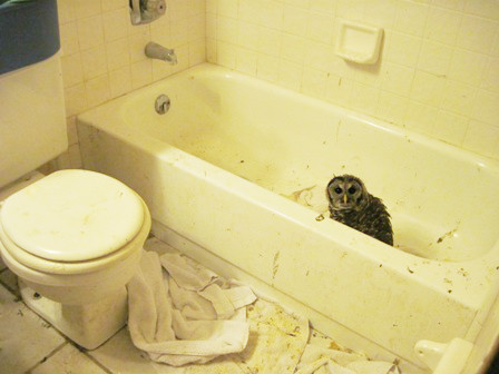 Owl from Gainesville rescue