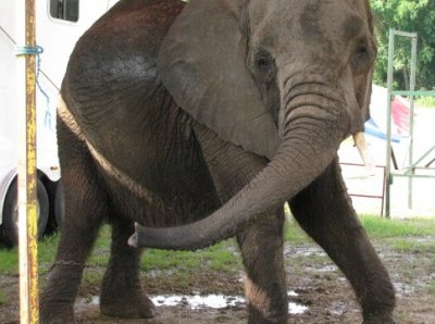Elephant Abusers Are Finally Facing The Consequences of Their Actions