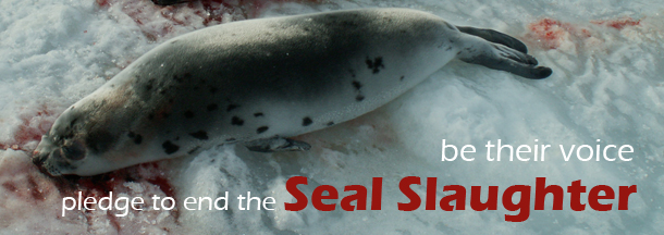 Seal Slaughter Pledge Button