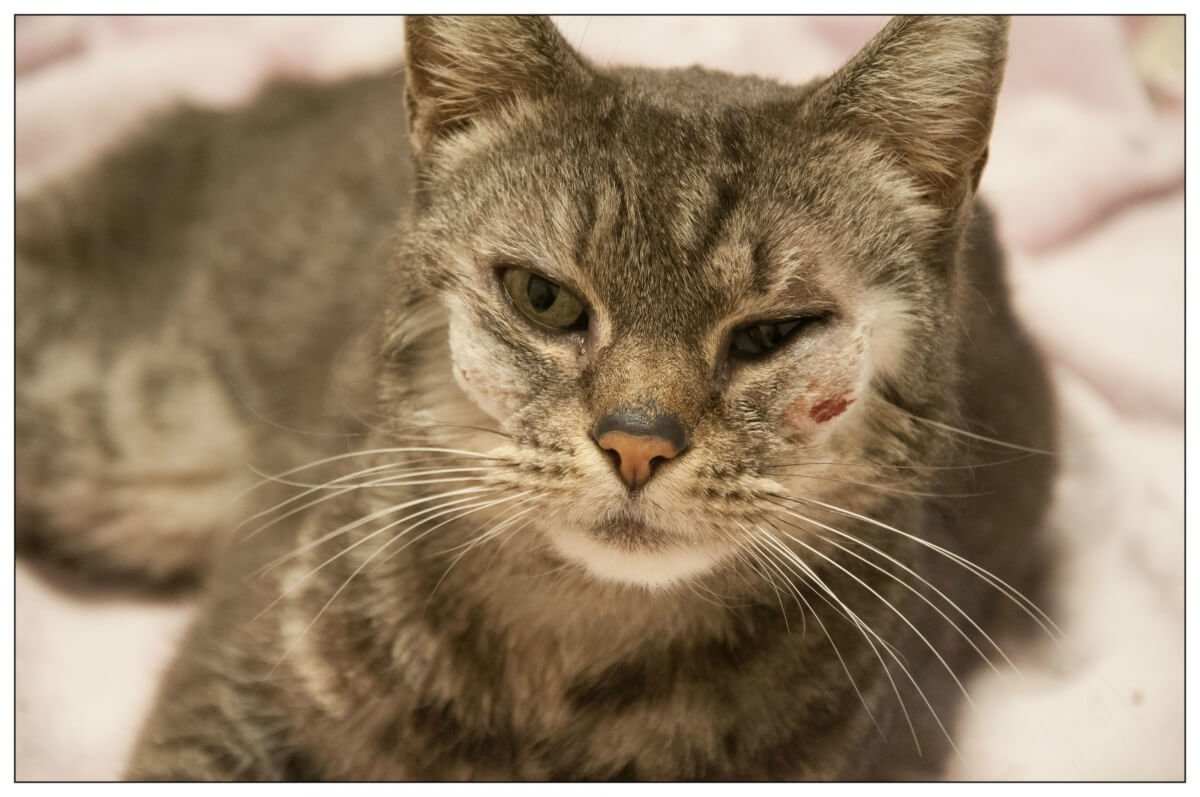 Olivia, a cat rescued by PETA's Community Animal Project