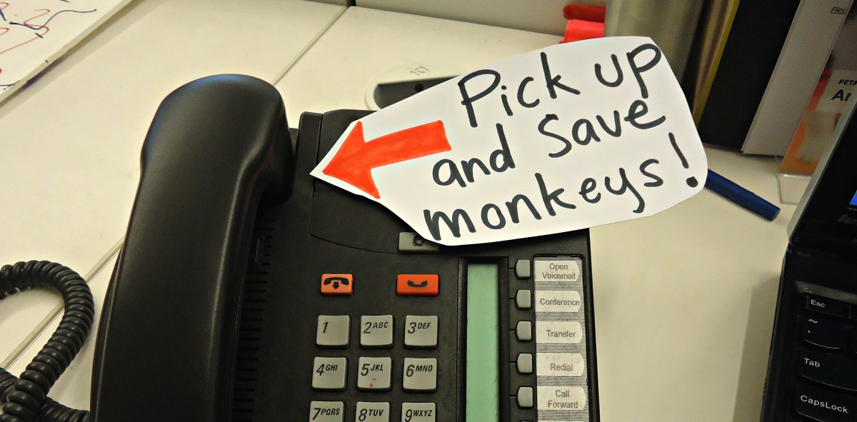 phone-monkeys