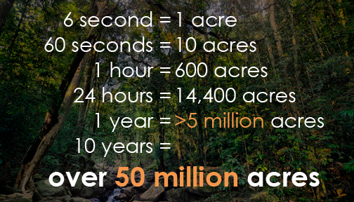 rainforest-deforestation-numbers