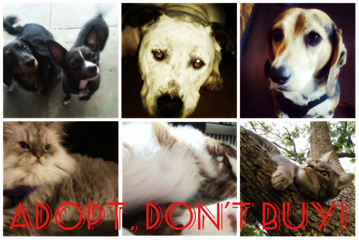 rescued dog and cat collage adopt don't buy
