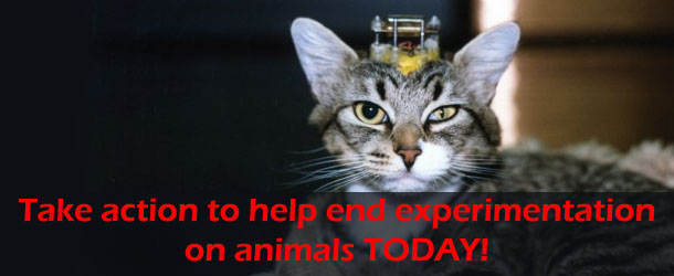 take-action-to-help-end-experimentation-on-animals-today