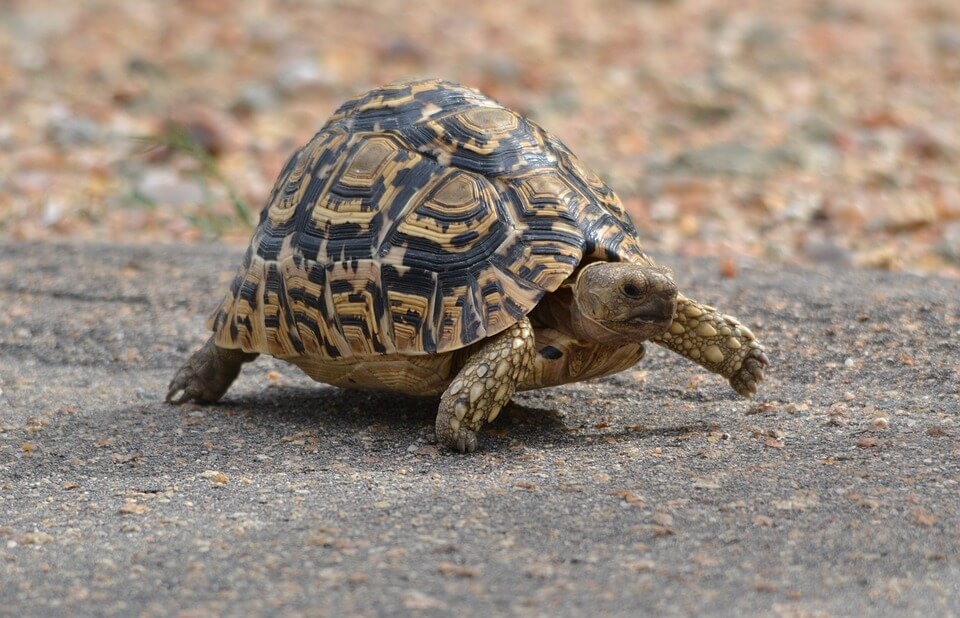 Help Turtles in the Road | peta2