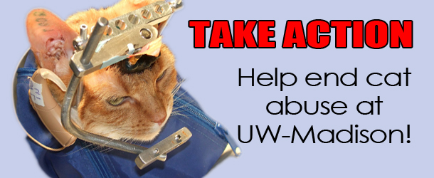 help cats at UW-Madison
