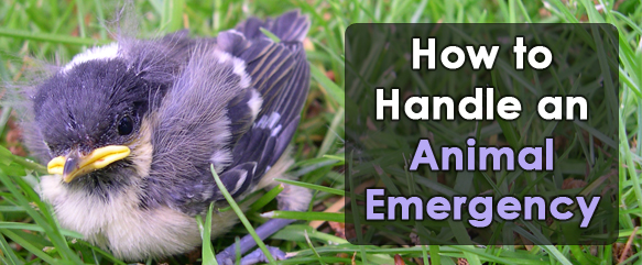 how to handle an animal emergency
