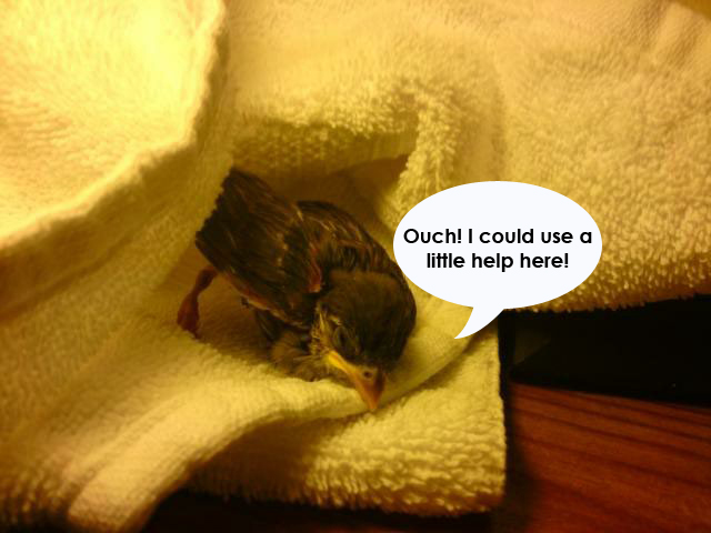 injured young fledge-speech-bubble