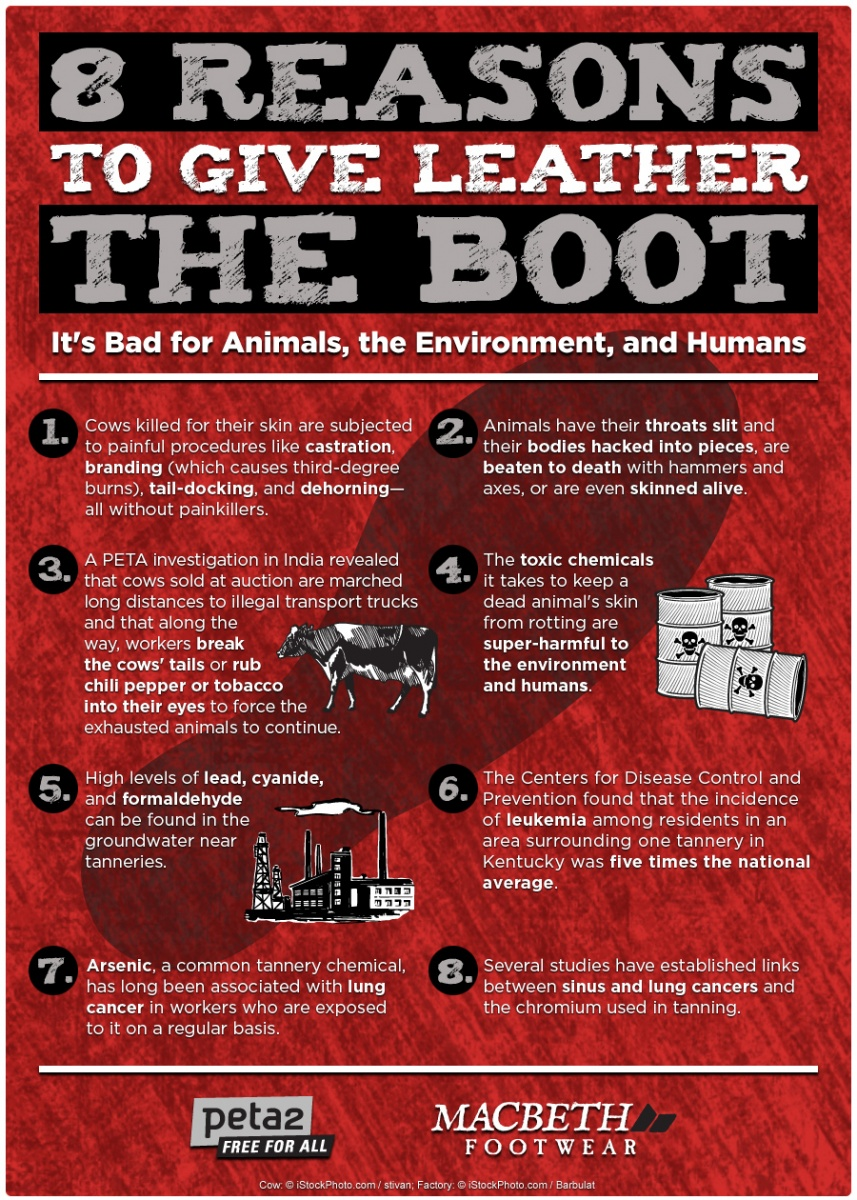 peta2 8 Reasons to Give Leather the Boot First Step Macbeth infographic