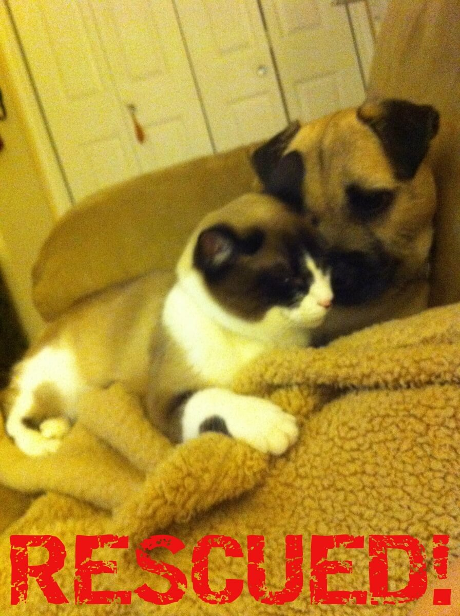 Rescued dog and cat submitted photo