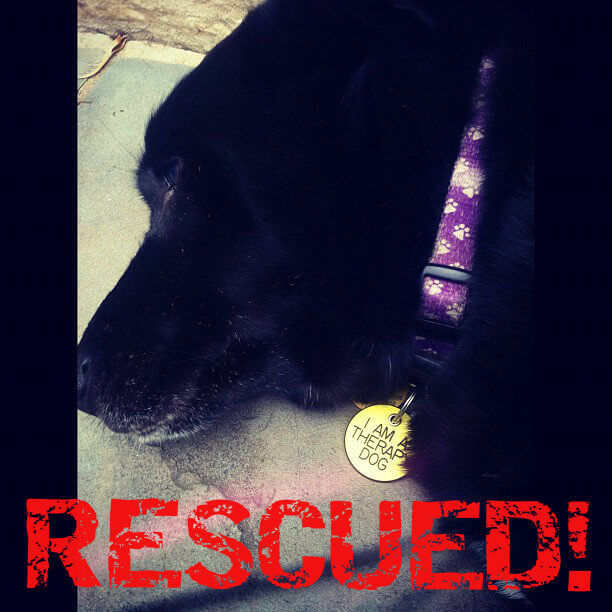 Rescued dog submitted photo