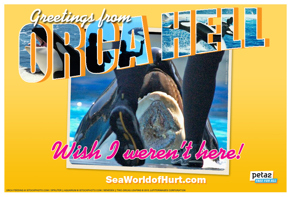 SeaWorld postcard