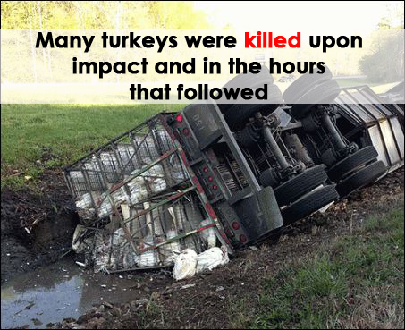 circle s turkey crash
