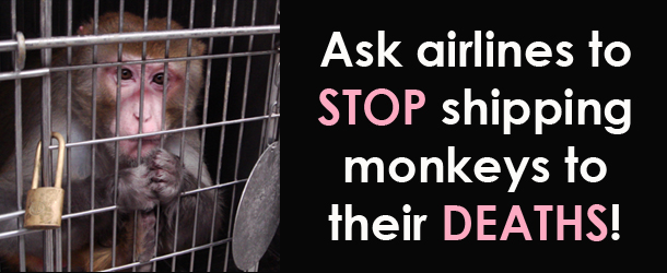 tell airlines to stop shipping monkeys to labs