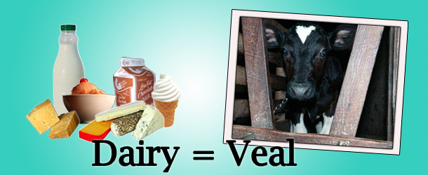 dairy-veal-button