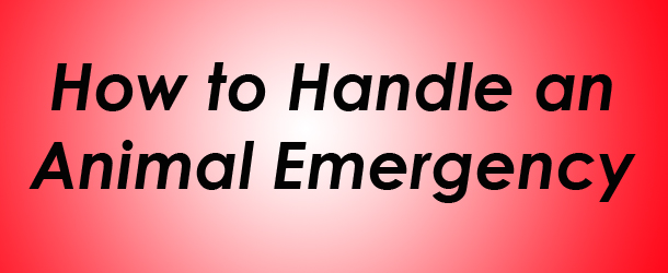how-to-handle-an-animal-emergency