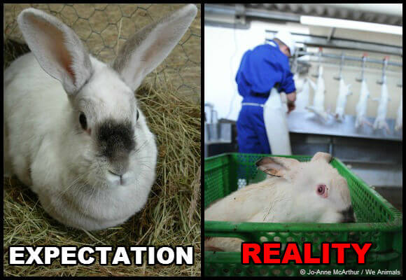 expectation-vs-reality-rabbits