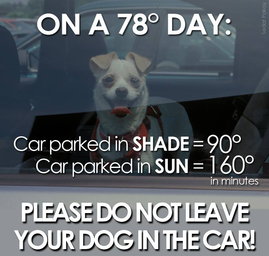 Share to save dogs in hot cars.