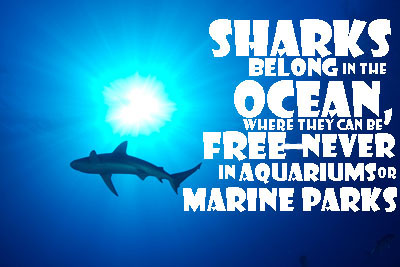 sharks-deserve-to-be-free
