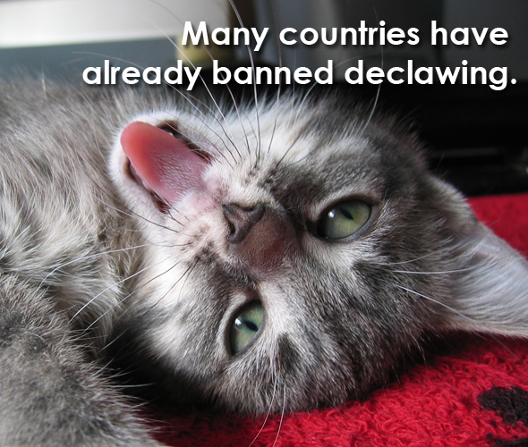 text-declawing-8-kitten-smiling