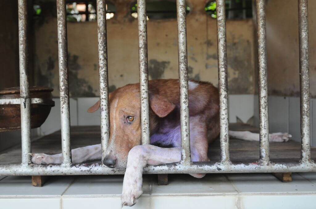 animals in shelters