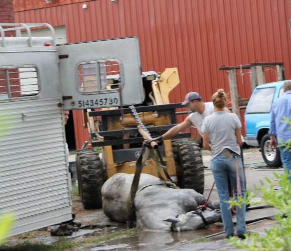 peta2 salt lake city horse carriage collapse