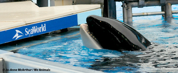 tilikum trapped at seaworld