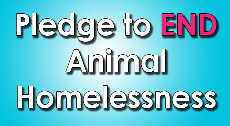 end animal homelessness